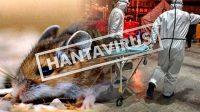 Ini Fakta Virus Hanta Yang Telah Menewaskan 1 Orang di China