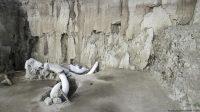 Gempar! Puluhan Fosil Mamut Raksasa Ditemukan di Lahan Proyek Bandara Baru